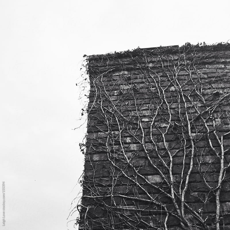 Old Vine in Winter on Brick Chimney by Leigh Love for Stocksy United