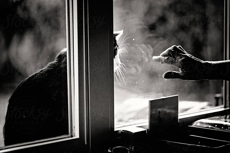 Woman hand caressing cat through window glass by Laura Stolfi for Stocksy United