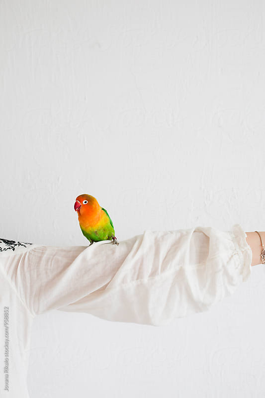 Woman and a parrot by Jovana Rikalo for Stocksy United