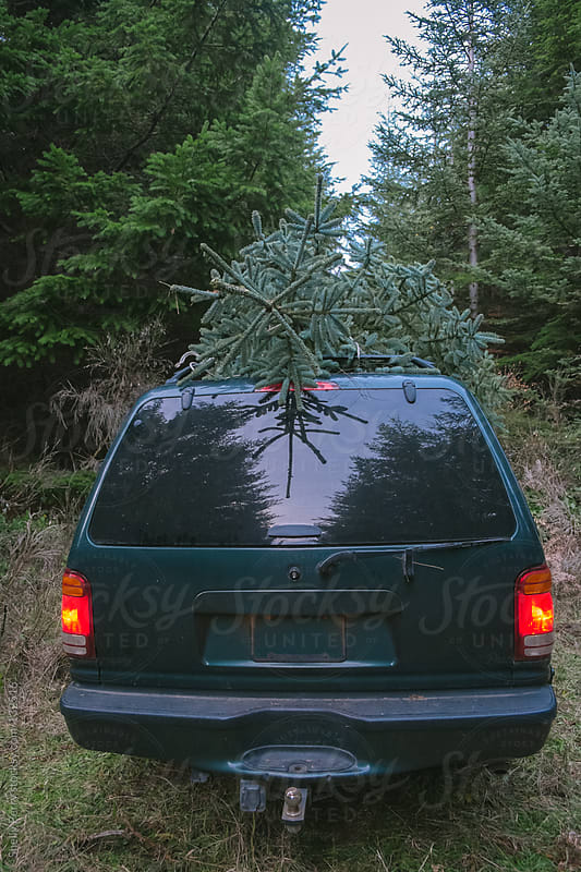 Christmas tree on top of vehicle in forest by Shelly Perry for Stocksy United
