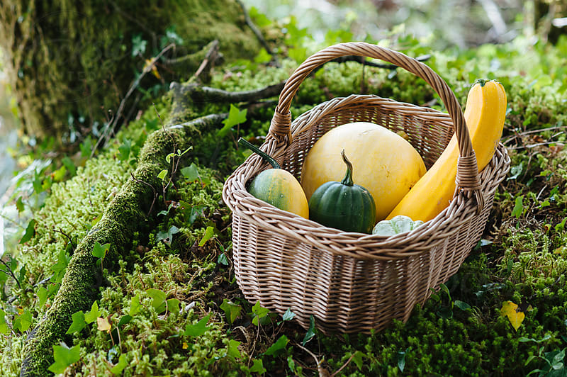 Squash and pumpkin in a wicker basket by Suzi Marshall for Stocksy United