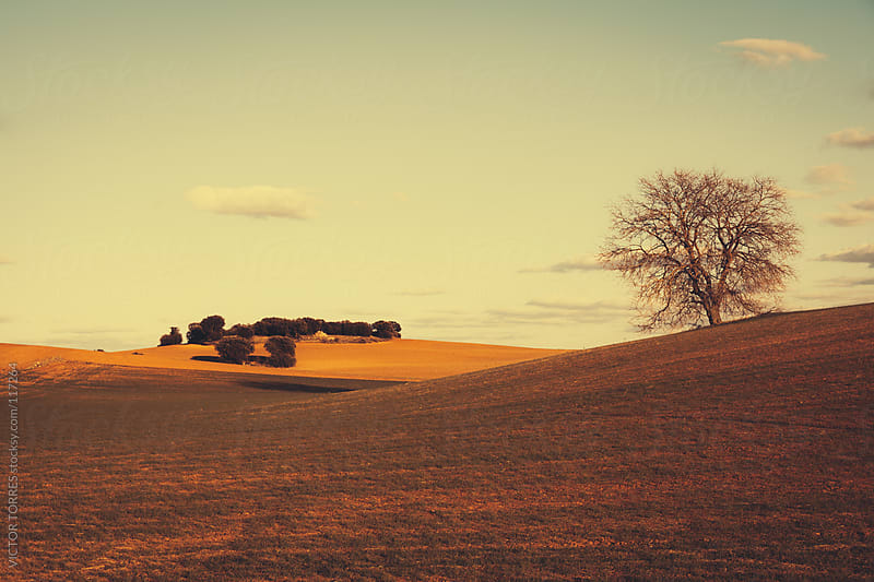 Lonely Tree in a Dry Meadow by VICTOR TORRES for Stocksy United