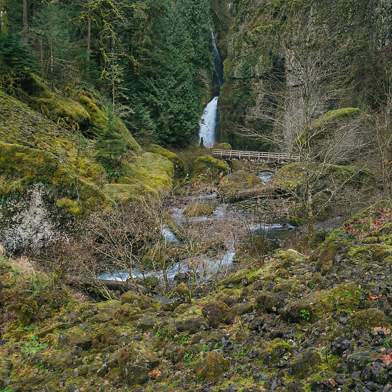 Pacific Northwest Waterfall in Oregon by Shelly Perry for Stocksy United