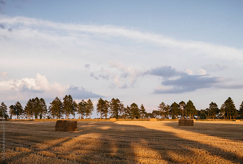 Straw bales in a stubble field at sunset. Norfolk, UK. by Liam Grant for Stocksy United