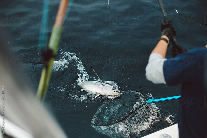 Tuna fisherman netting fish off side of boat by Kate Daigneault for Stocksy United