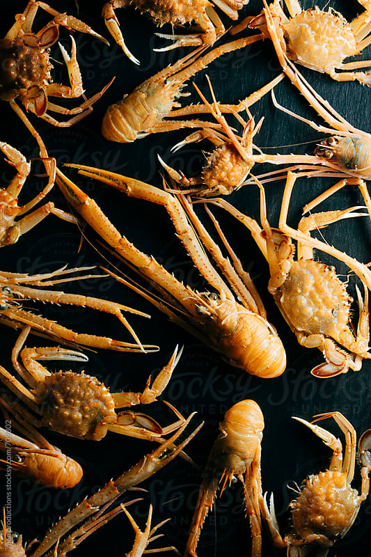Crab and shrimp still life. by mee productions for Stocksy United