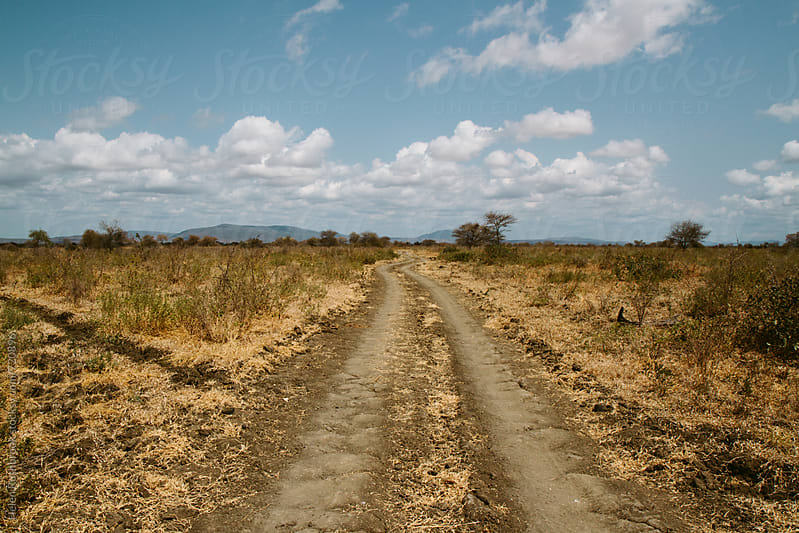 Dirt road through a game reserve in southern Tanzania. by Helen Rushbrook for Stocksy United