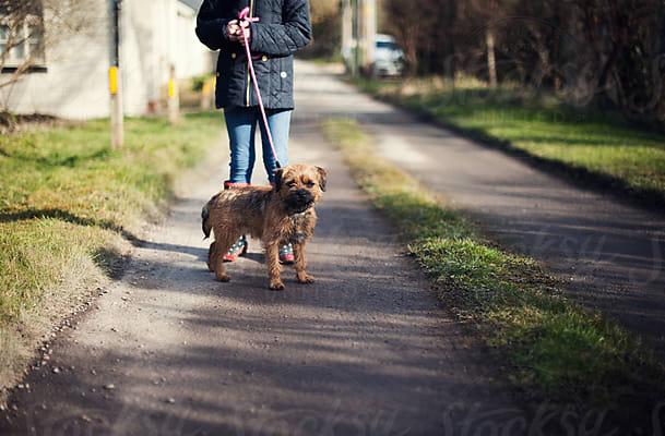 Dog-walking may be hazardous to seniors' health
