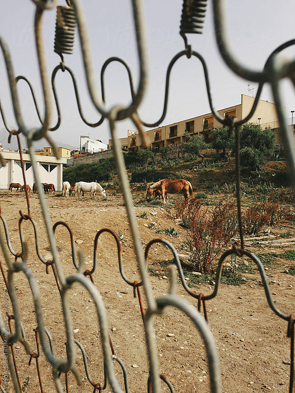 Horses Feeding Behind Fence by Julien L. Balmer for Stocksy United