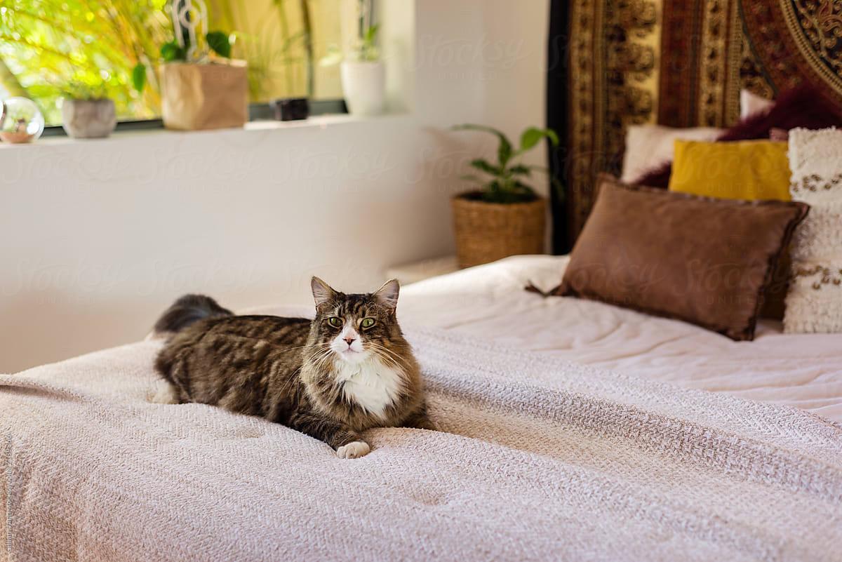 . boho bedroom decor  cat on bed by Gillian Vann   Bedroom  Cat