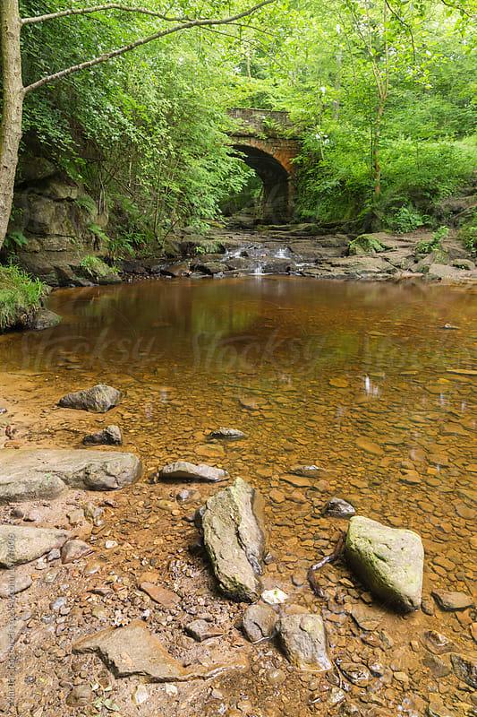Mountain stream by Marilar Irastorza for Stocksy United