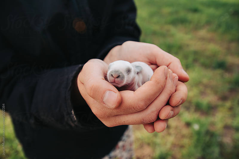 Woman carefuly holding a newborn bunny by Justin Mullet for Stocksy United