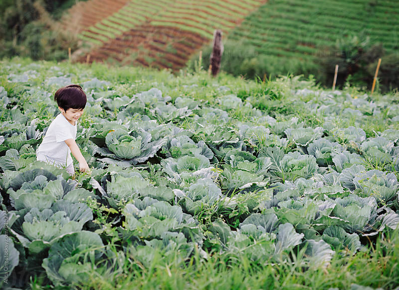 Little boy at a vegetable farm by Alita Ong for Stocksy United