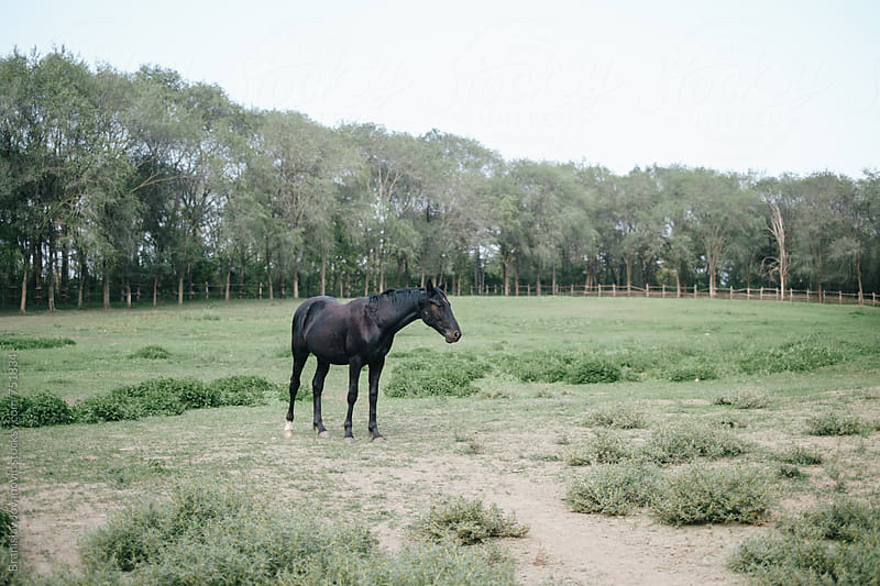 Black Horse at the Farm by Brkati Krokodil for Stocksy United