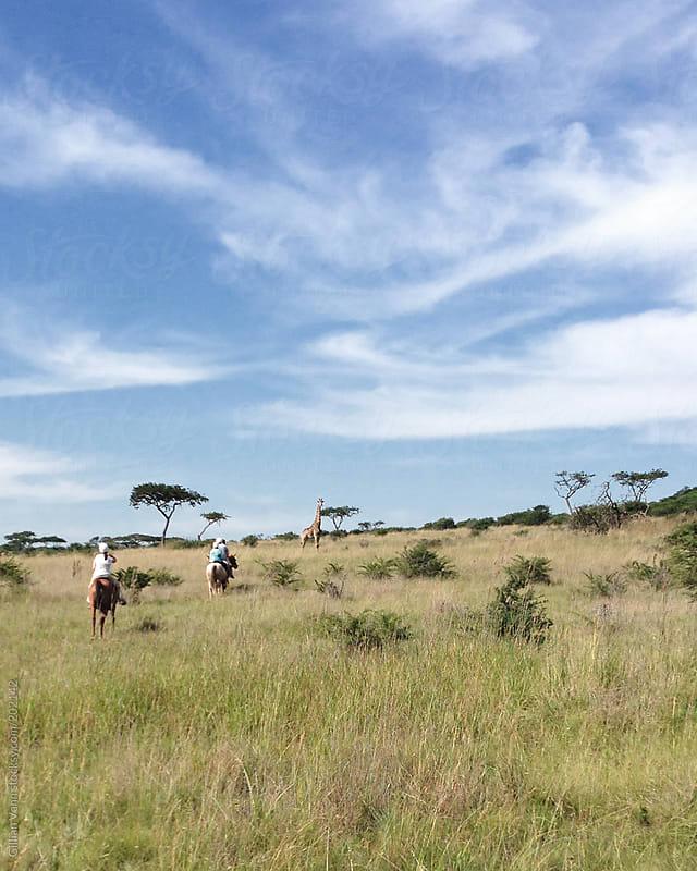 horseriding in Africa by Gillian Vann for Stocksy United