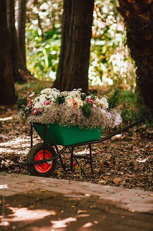 A wheelbarrow filled with flowers in the middle of the woods by Constanza Caiceo for Stocksy United
