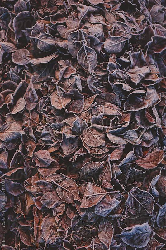 Texture background of frozen leaves by Rob and Julia Campbell for Stocksy United