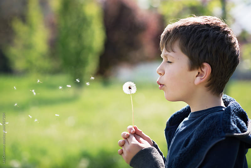 Young boy blowing a dandelion on a field by Lea Csontos for Stocksy United
