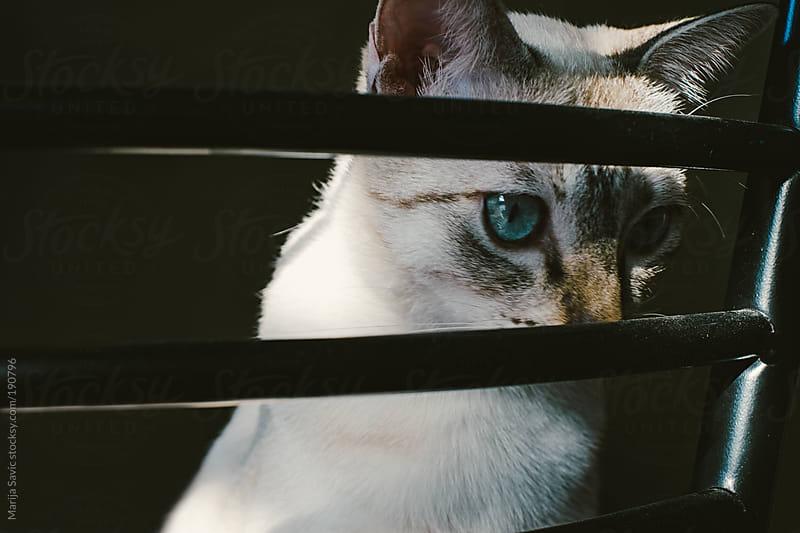 Cat Looking through the Bars by Marija Savic for Stocksy United
