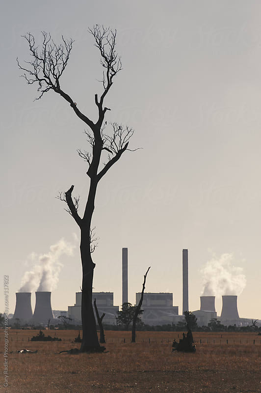 Dead Tree with Power Station in Background by Gary Radler Photography for Stocksy United
