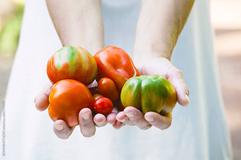 Close up of woman showing variety of fresh tomatoes. by BONNINSTUDIO for Stocksy United
