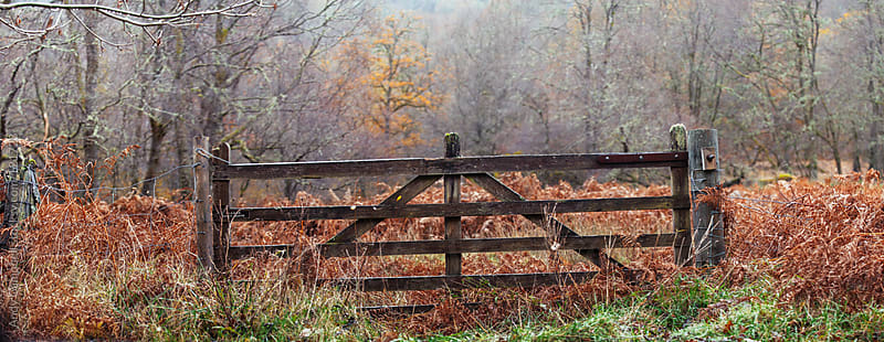 A rustic wooden gate in the mist by Andy Campbell for Stocksy United