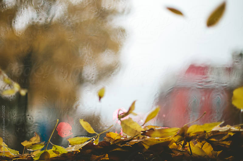Looking through a window as the rain and wind blows leaves around in stormy weather. by Cherish Bryck for Stocksy United