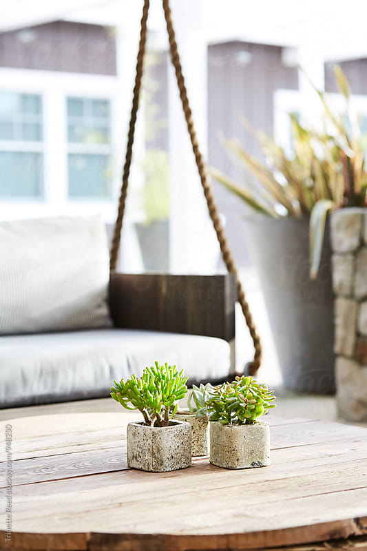 Close-up of succulents on table on outdoor lounge at restaurant  by Trinette Reed for Stocksy United