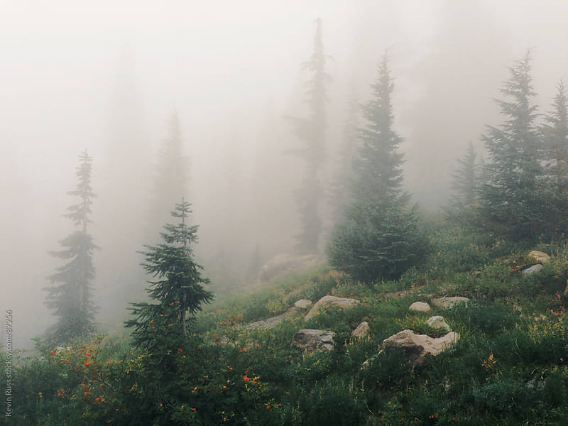 Foggy Sub Alpine Forest by Kevin Russ for Stocksy United