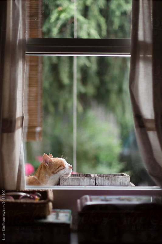 Cat naps leaning on wooden pots on windowsill by Laura Stolfi for Stocksy United
