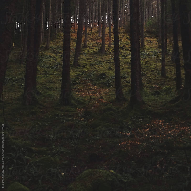 Scottish Forest by Maximilian Guy McNair MacEwan for Stocksy United