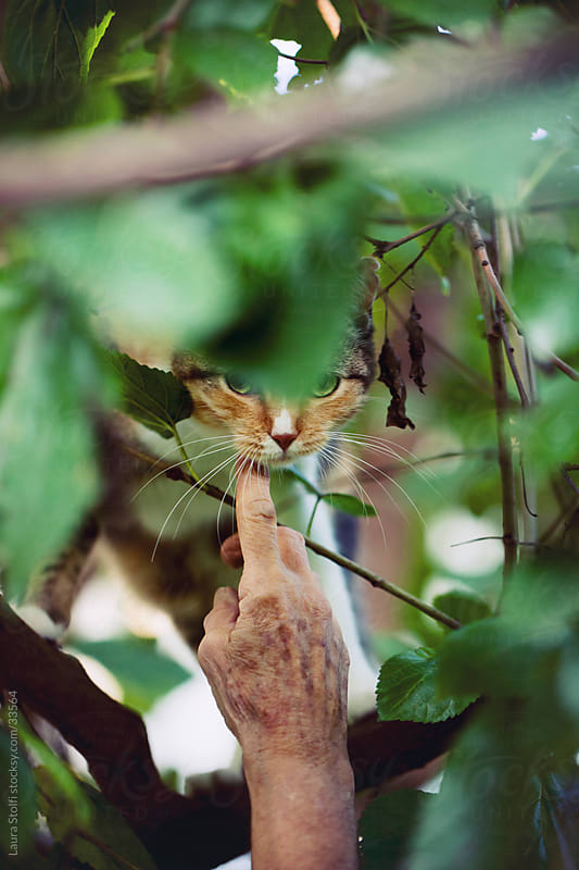 Woman caressing a tabby cat peering out from green leaves on tree by Laura Stolfi for Stocksy United