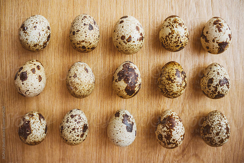 Quail eggs aligned by ACALU Studio for Stocksy United