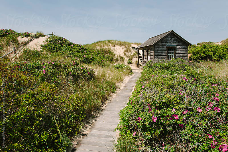Nantucket Beach Dunes by Raymond Forbes LLC for Stocksy United
