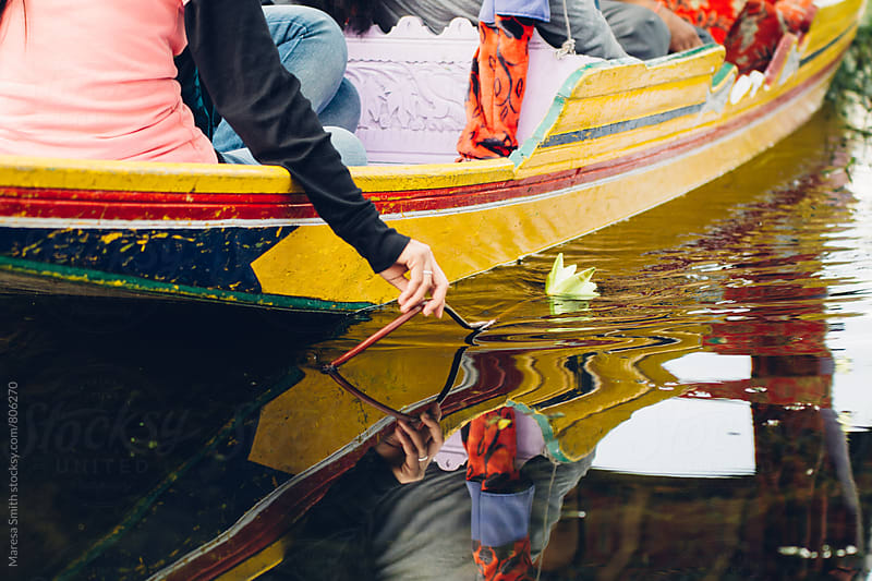 A caucasian woman's hand drops a lotus flower into the water, from the side of a shikara boat by Maresa Smith for Stocksy United