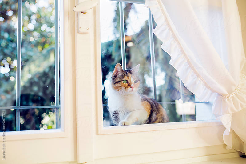 Cat peers inside house while sitting behind close window by Laura Stolfi for Stocksy United