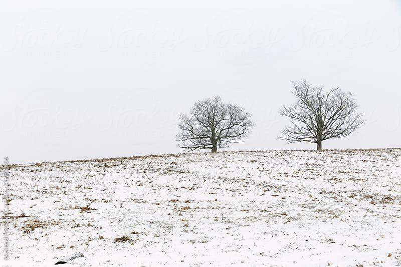 Rural Winter Scene in Massachusetts by Raymond Forbes LLC for Stocksy United