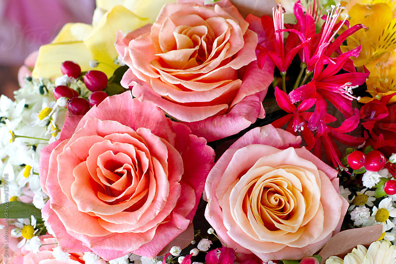 bouquet of pink roses by Sonja Lekovic for Stocksy United