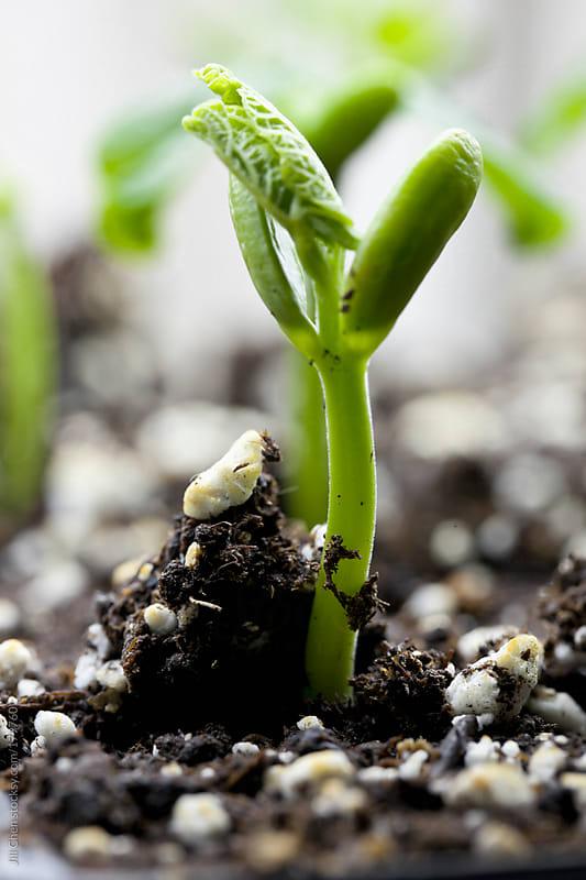 Garden Grows by Jill Chen for Stocksy United