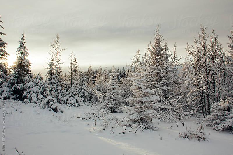 Winter wonderland - snow covered forest at sunset in the winter by Mihael Blikshteyn for Stocksy United
