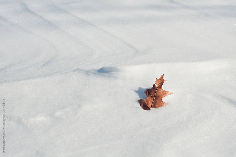 Single leaf sitting on top of post-blizzard snow drift by Kathryn Swayze for Stocksy United