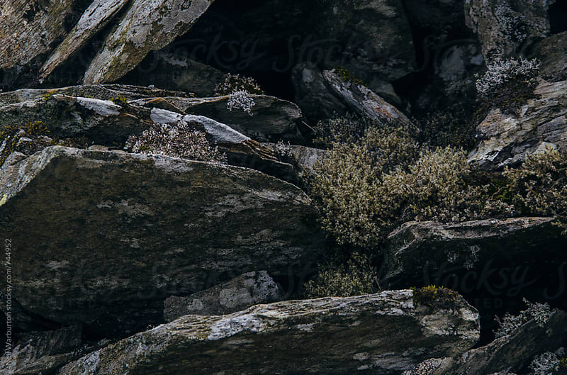 Close up of rocks with moss by Neil Warburton for Stocksy United