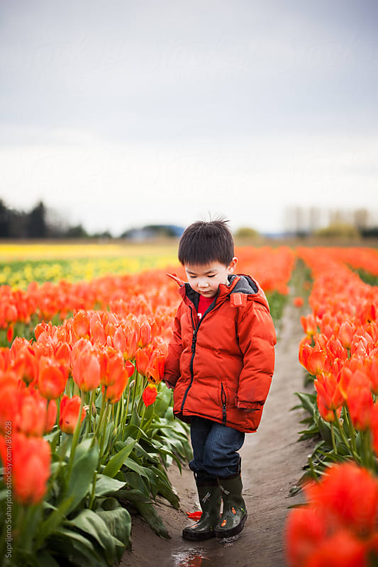 Asian boy standing in tulip field by Suprijono Suharjoto for Stocksy United