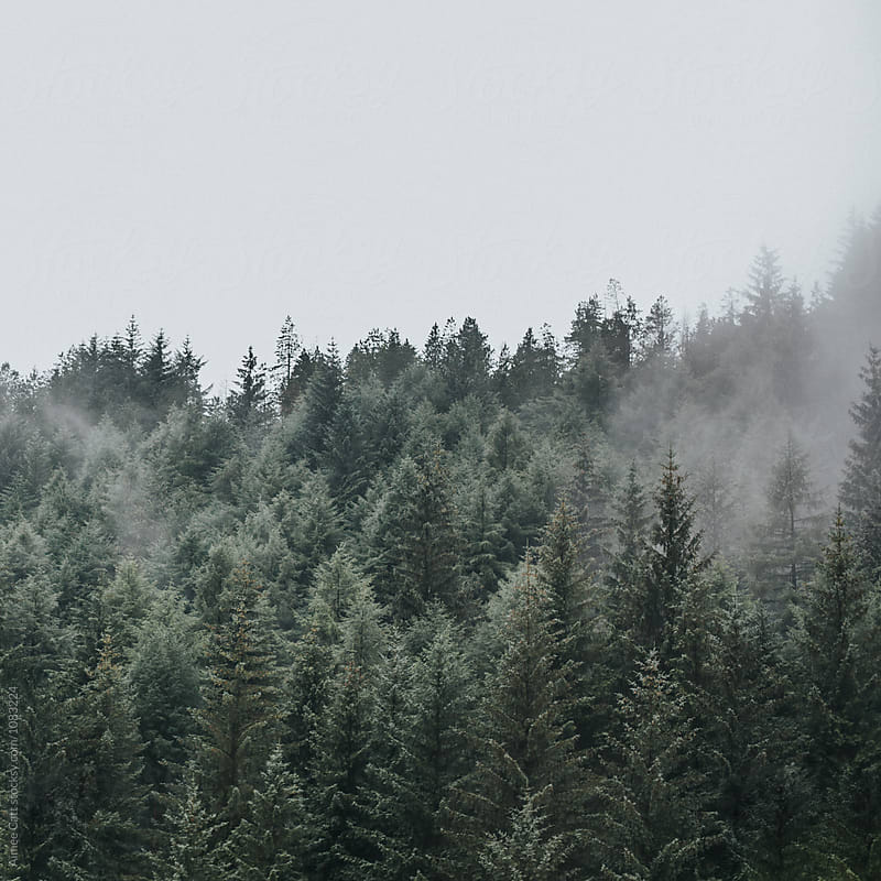 Pine Trees in the Clouds by Aimee Catt for Stocksy United