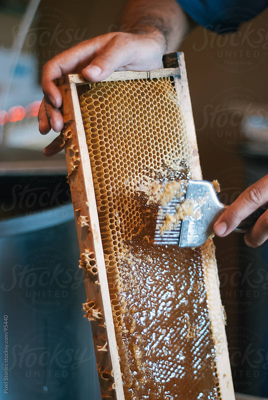 Uncapping frame of honey  by Pixel Stories for Stocksy United