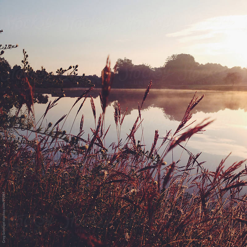 Fall foliage, leaves, plants and natural scenery at sunrise by Greg Schmigel for Stocksy United