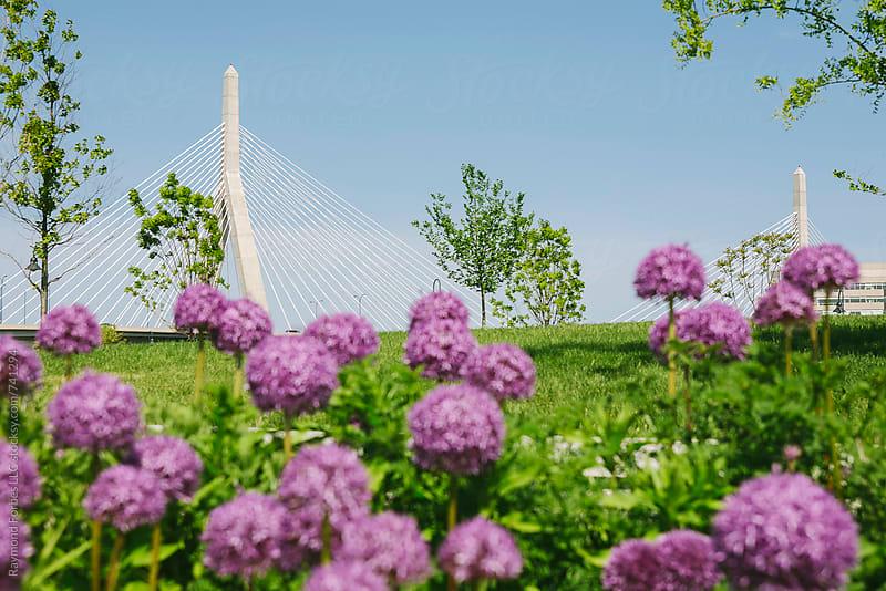 Urban Park Boston with Zakim Bridge by Raymond Forbes LLC for Stocksy United