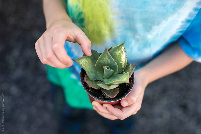 Child carefully touches the sharp needles of a small potted cactus by Cara Dolan for Stocksy United