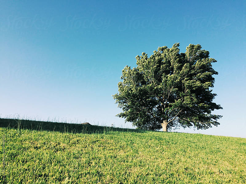 tree on the hill by jira Saki for Stocksy United