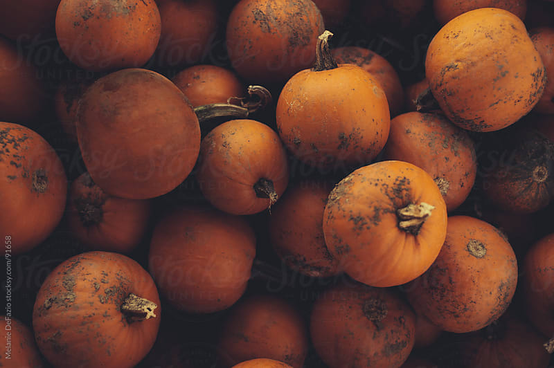 Pumpkins by Melanie DeFazio for Stocksy United